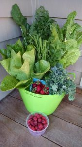 Swift Farm CSA basket 10June2015