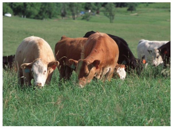 Pasture Management 8-week Course