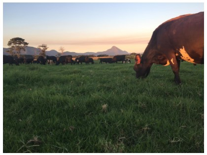 Intro to Pasture Management