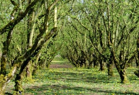 Organic Hazelnuts – 3rd Annual Summer Tour