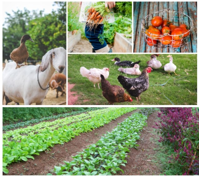 Living & Working on My Rural Land